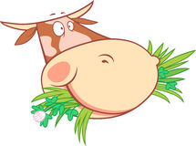 一头嚼的母牛的头 库存图片