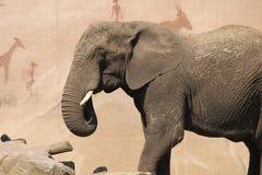 一头大象在动物园里 免版税图库摄影