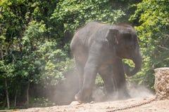 一头年轻大象的图象在自然背景的 免版税图库摄影