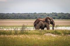 一头大象的旁边外形在Etosha 免版税库存图片