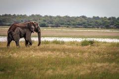 一头大象的旁边外形在Etosha 库存照片