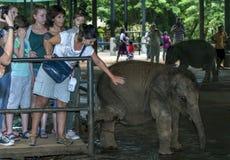 一头年轻大象等待对人工喂养由游人在Pinnawela (Pinnewala)大象孤儿院在斯里兰卡 库存图片