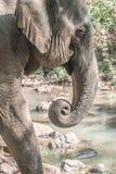 一头大象 免版税库存照片