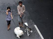 一年轻夫妇运载的狗peliharaanya在独奏汽车任意天a 免版税库存图片