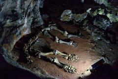 一婴孩声势浩大在的骨骼在石灰岩地区常见的地形洞 库存图片