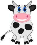 一头微笑的母牛 免版税库存图片