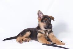 一年轻德国牧羊犬小狗放下的图象 免版税库存照片