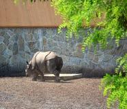 一头成人犀牛在动物园里 库存照片