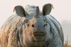 一头有角的犀牛 免版税库存照片