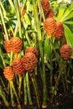 从一间温室的热带植物在Kew庭院里 库存图片