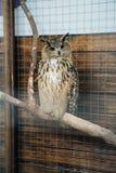 一头灰色猫头鹰在一只笼子坐在动物园里 库存图片