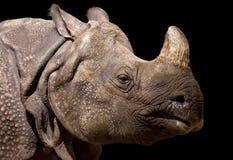 一头犀牛的画象在黑背景,柏林的 免版税库存照片
