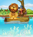 一头狮子和一只火鸡在一根浮动树干上 库存照片