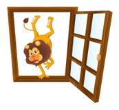 一头狮子在窗口里 免版税图库摄影
