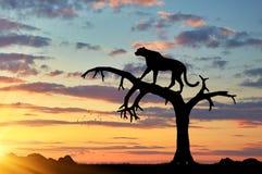 一头猎豹的剪影在树的 免版税库存图片