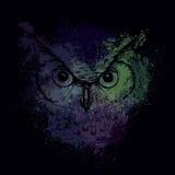 一头猫头鹰的头在明亮的色的斑点背景的晚上  免版税图库摄影