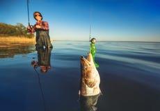 一件红色衬衣的一位渔夫捉住了一条鲈 库存图片