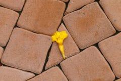 一黄色花下落和在砖块死了 库存照片