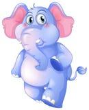 一头年轻蓝色大象 免版税图库摄影