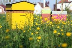 一间蜂房 免版税库存照片