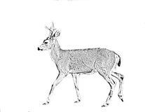 一头黑被盯梢的鹿的线艺术治疗 库存照片