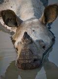 一头野生伟大的一有角的犀牛的画象 免版税库存照片