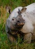 一头野生伟大的一有角的犀牛的画象 免版税库存图片