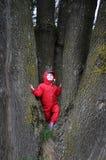 一件雨衣的小女孩在树干之间 库存照片