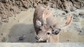 一头鹿的画象在土的 图库摄影