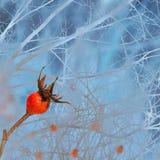 一dogrose的布什在冬天多雪的冷淡的神仙的森林里 免版税库存图片