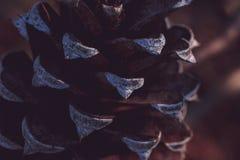 一pinecone的极端特写镜头在森林里 库存图片