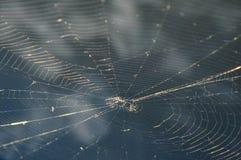 一spiderweb的顶视图在蓝色早晨天空前面的 免版税库存图片