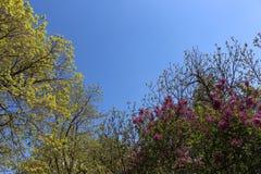 丁香和蓝天联合的难以置信的风景  库存图片