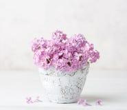 丁香小淡粉红的花束在泥罐的对白色墙壁 库存图片