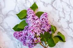 丁香的开花枝杈在大理石背景的 免版税图库摄影