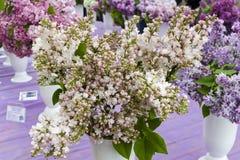 丁香美丽的花束 图库摄影