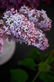 丁香紫色分支在桃红色花瓶的 一朵精美和美丽的花 库存图片