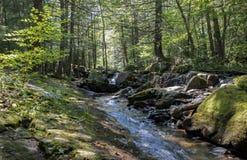 七个木盆瀑布岩石森林小河 库存照片