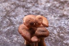 七个蘑菇 库存照片