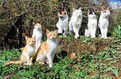 七只猫坐小山 图库摄影