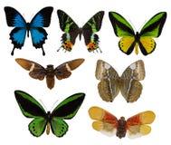 七只trpical被隔绝的蝴蝶 库存照片