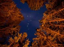 七星可看见的通过橙色升树 免版税库存图片