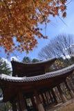 七有裂片的枫叶寺庙 免版税库存图片