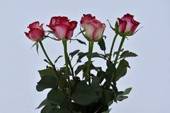 七朵玫瑰花束在白色背景的 免版税库存图片