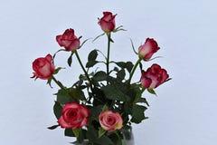 七朵玫瑰花束在白色背景的 库存照片