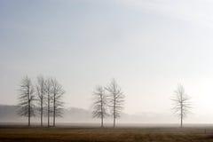 七棵树 免版税库存图片