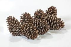七自然棕色松树锥体样式和纹理 免版税库存图片