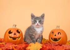 万圣夜与起重器0灯笼的平纹小猫 库存照片