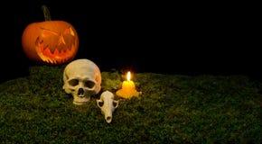 万圣夜南瓜、人的头骨、动物头骨和蜡烛glowin 免版税库存照片