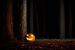 万圣夜南瓜在一个森林里在晚上 免版税库存照片